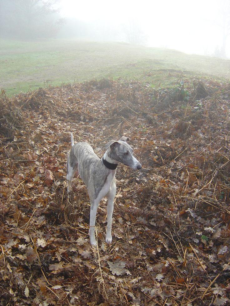 Winnie in the mist