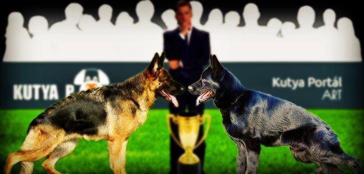A Magyar Ebtenyésztők Országos Egyesületeinek Szövetsége bejelentette a 2016. évi CAC és CACIB kutyakiállítások naptárát: Hónap Dátum Nap Típus Helyszín Ja