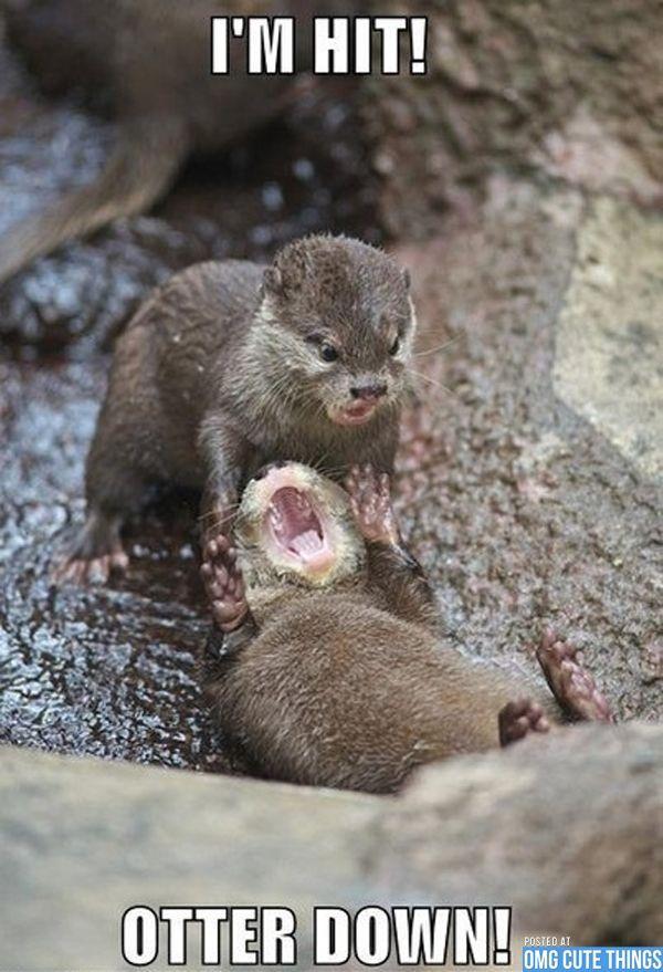 Good Morning Otter Meme : Otter down very funny meme animals pinterest cops
