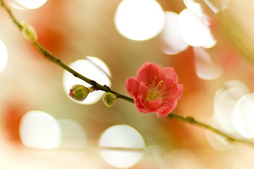 <3: Kevin Fai, Flowers Reflected, Floral Arranging, Beautiful Flowers, Peaches, Photo, Floral Inspiration, Peach Flowers