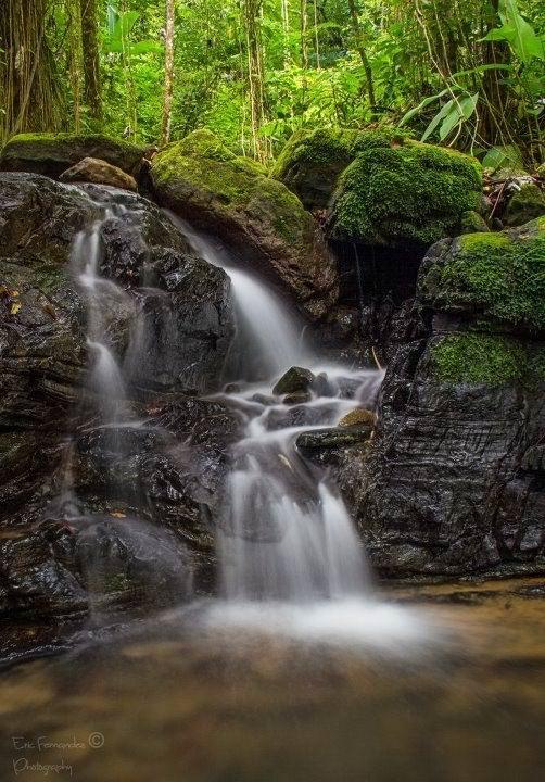 40 Best Images About Cascadas De Puerto Rico On Pinterest