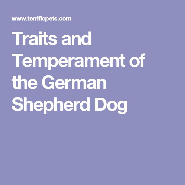 Traits and Temperament of the German Shepherd Dog