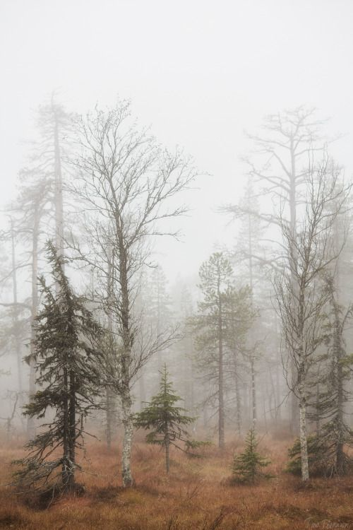 294 best MISTYinto the mist images on Pinterest Forests, Places