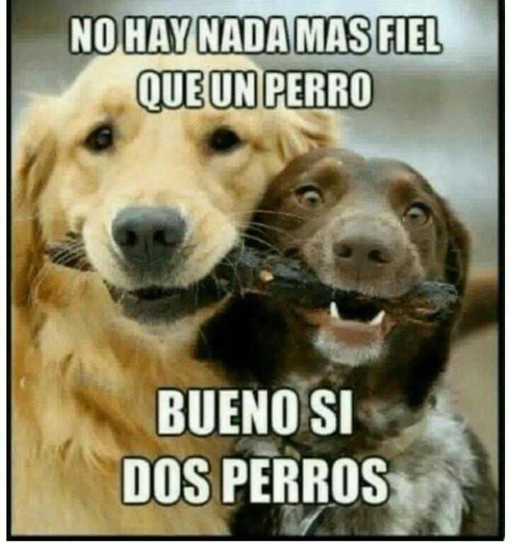 Dos Perros Nada Mas Fiel Que Un Perro Bueno Si 1k Perros Expertoanimal Mundoanimal Reinoanimal Animales Naturaleza Perros Frases Perros Perros Lindos