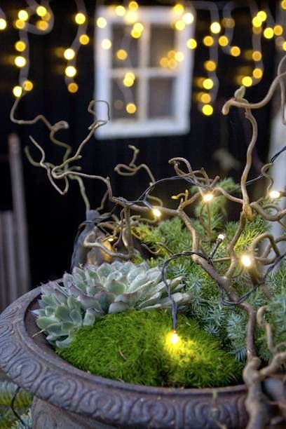 moss, succulent and curly willow