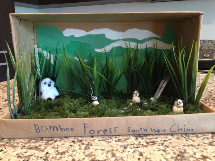 diagram of a tropical forest logical data flow shoebox habitat. bamboo forest. diorama 1st grade | hábitat project pinterest school