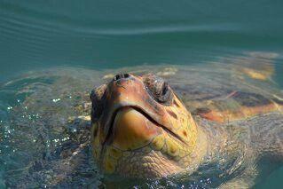 Turtle love/Kefalonia