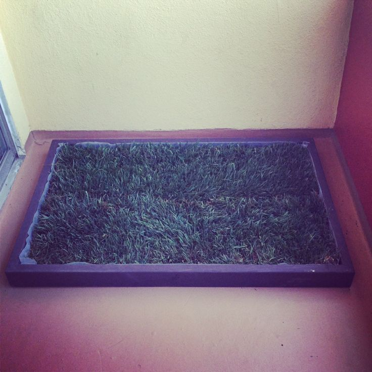 indoor dog potty and dog potty grass delivery for dog litter boxes and the dog potty patch in los angeles and orange county