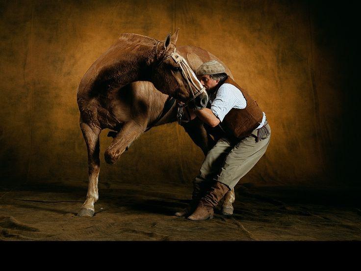 fond d cran gratuit t l charger download free wallpaper cheval criollo argentin