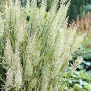 Flower Garden Ideas In Michigan 67 best garden images on pinterest | flower gardening, landscaping