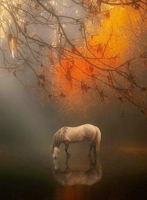 Autumn Mist by Jenny