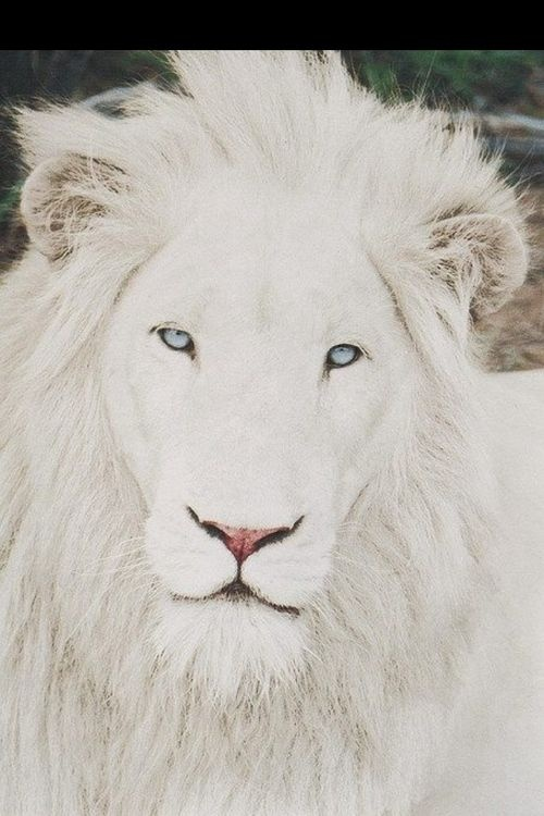 1000+ images about Albino Animals on Pinterest | Deer ...