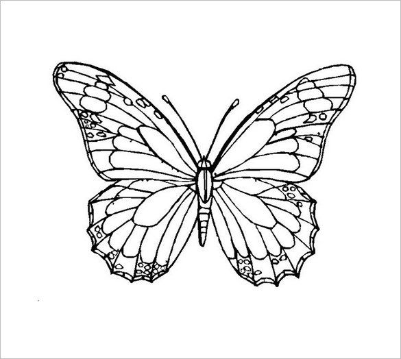 Butterfly Template3 Butterfly Coloring Page Tattoo Templates Butterfly Template