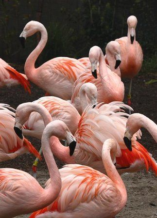 Book your tickets online for Woodland Park Zoo, Seattle: See 1,172 reviews, articles, and 499 photos of Woodland Park Zoo, ranked No.21 on TripAdvisor among 373 attractions in Seattle.