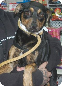 06/03/2016 DOG TO ADOPT Brooklyn, NY - SEAN CASEY ANIMAL RESCUE - NO KILL - Terrier (Unknown Type, Medium) Mix. Meet Chacha, a 3 year old female dog who will be your faithful companion. http://www.adoptapet.com/pet/15197702-brooklyn-new-york-terrier-unknown-type-medium-mix