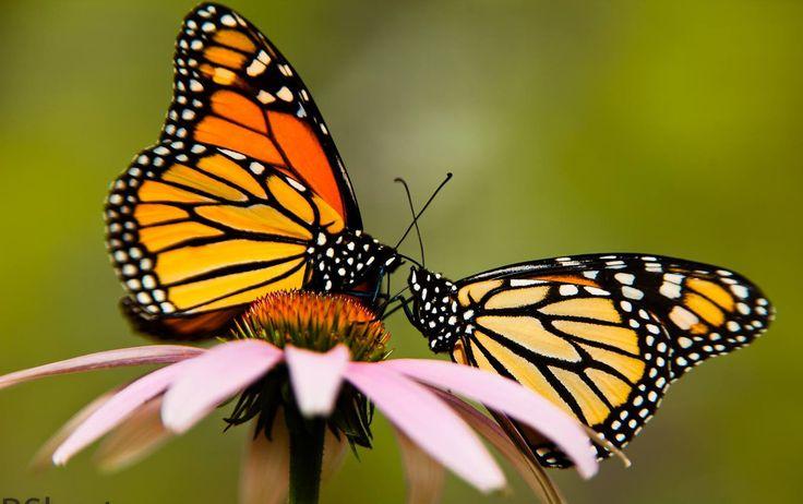 Butterfly Pavilion - Elkton Community Education Center