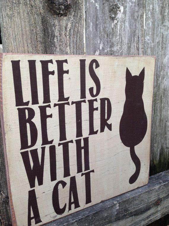 La vita è migliore con un gatto