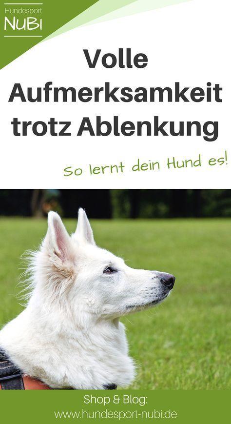 Entrenamiento bajo distracción: por qué es tan importante + consejos de entrenamiento   – Hund