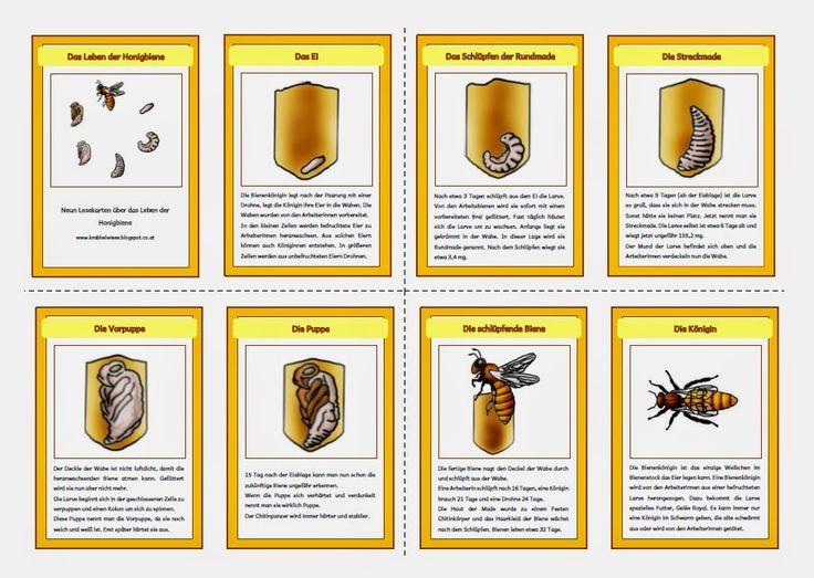 845 besten Elementary Science Bilder auf Pinterest