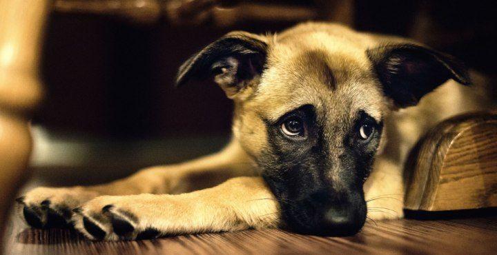 ¿Los animales realmente pueden llegar a suicidarse?