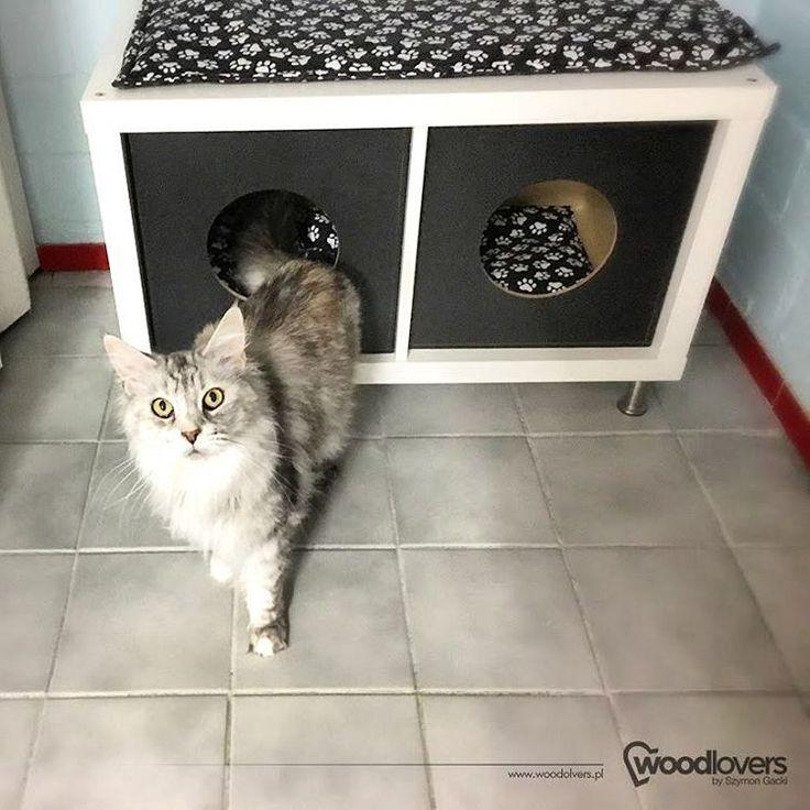 """Polubienia: 68, komentarze: 1 – Szymon Gacki (@woodlovers.pl) na Instagramie: """"Photo of a happy cat 😸 of one of my customers from Germany. Thank you! --- Zdjęcie zadowolonego…"""""""
