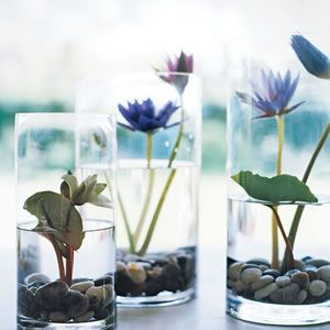 Lily Pond In A Vase