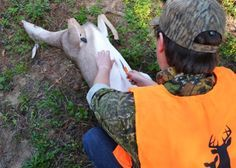 How to Field-Dress a Deer...This is a need to know if you are going to hunt. Pictures are kinda gross.