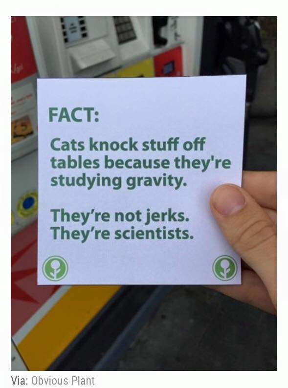 Fact:  Cats knock stuff off tables because they're studying gravity.  They're not jerks. They're scientists.