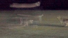 Spooks: Eerie photo seems to show ghosts of couple and dog:http://www.mirror.co.uk/news/weird-news/pictured-ghost-couple-walking-dog-6738320