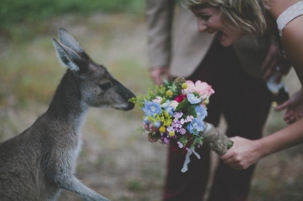 Adorable kangaroos at the Donnelly River Wedding. can i have a kangaroo please?