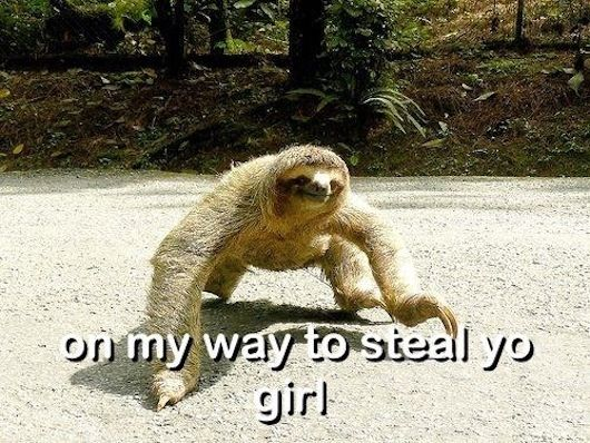 Sloth that's coming after your girl THIS IS MY FAVORITE PICTURE IVE EVER SEEN IN MY ENTIRE LIFE  I'm crying