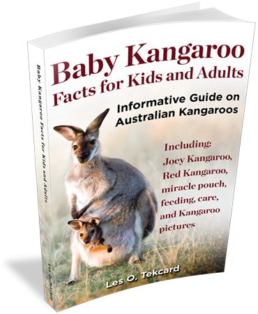 Download Baby Kangaroo Facts for Kids and Adult eBook