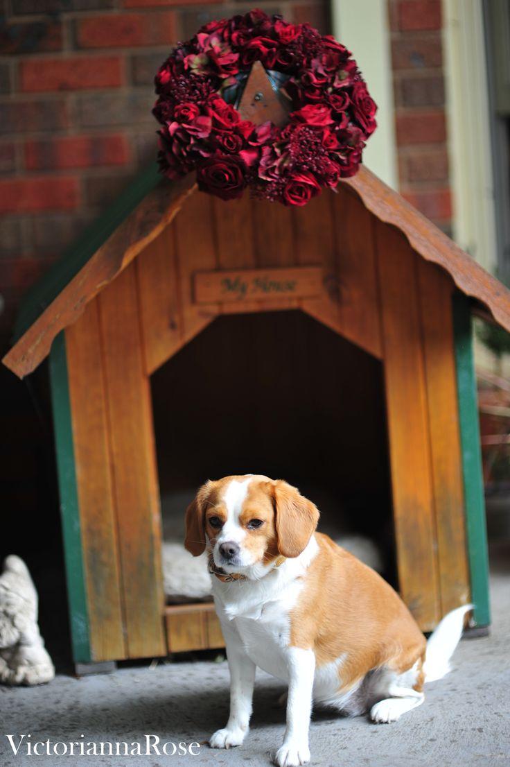 Our dog Gypsy.