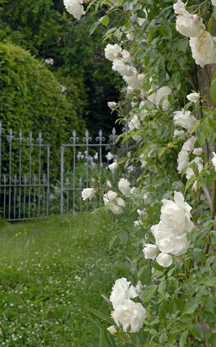 11 Ideas to Steal for a Moonlight Garden