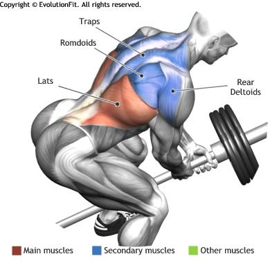 LATS - BENT OVER TWO ARM LONG BAR ROW