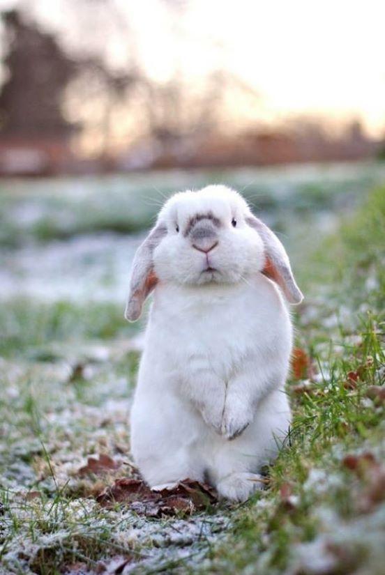 Открытки, прикольные картинки зайцев и кроликов