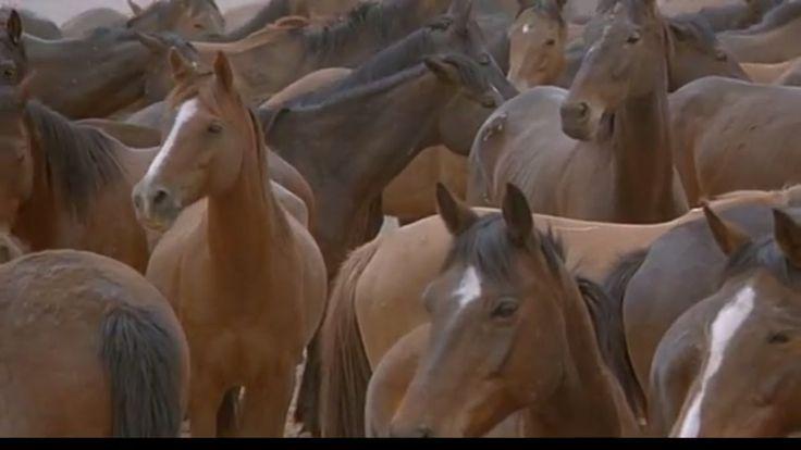 Фильмы о лошадях. Вопрос чести ( 1995 )