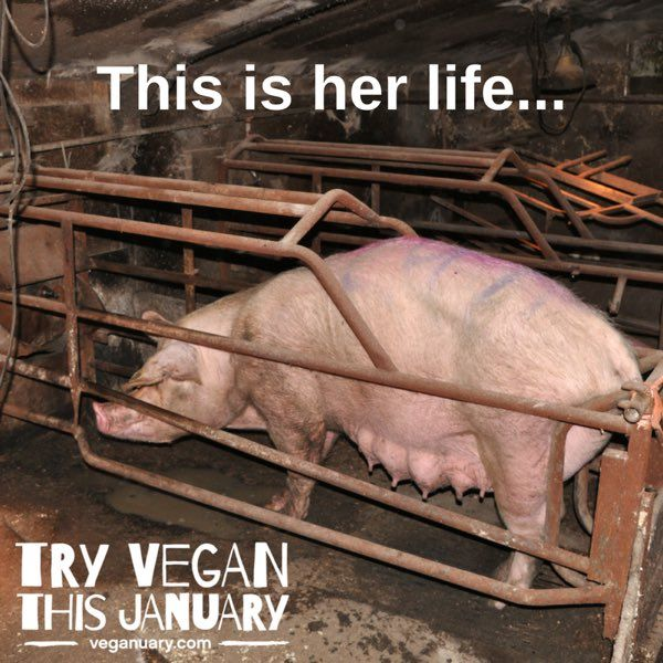 Would it kill you to go vegan, because your diet choices make her life a living hell.