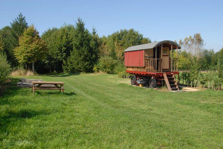Catanger Llama Farm, Towcester, Northamptonshire - Pitchup.com