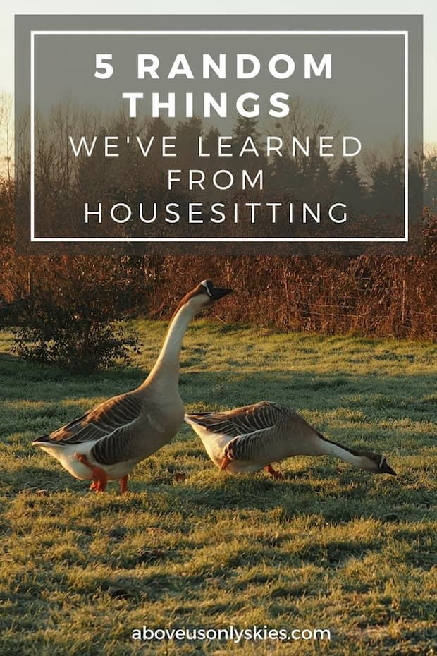 From flooded bedrooms and being locked out of the house to forever regretting teaching the parrot a new phrase – here are the top five lessons we've learned from housesitting