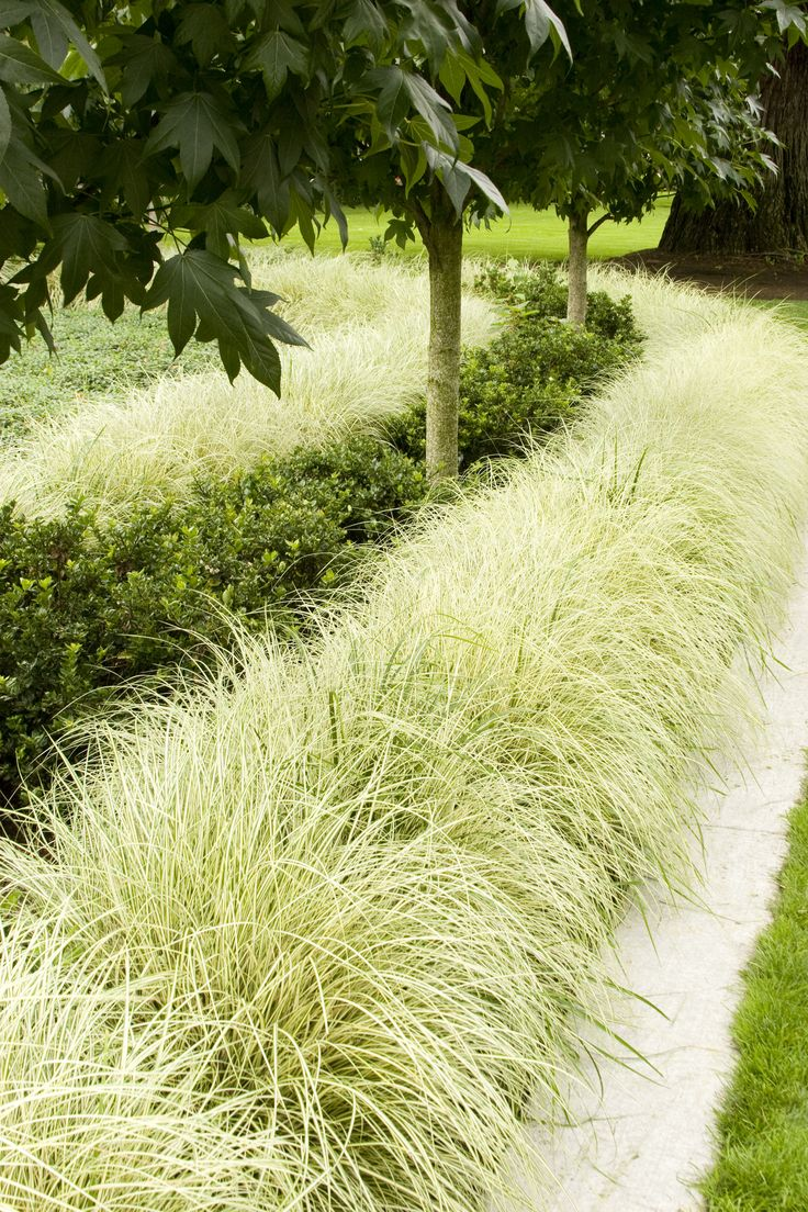48 best ornamental grasses images on pinterest garden for Long grass landscaping