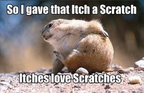 Itches love Scratches.Cutest Baby, Funny Pets, Animal Pics, Funny Pictures, Animal Humor, Pets Pictures, Baby Animal, Funny Animal, Animal Photos