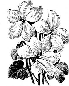 black and white drawing violet flower - Google Search