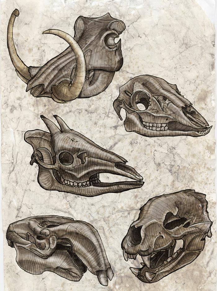 A variety of five interesting skulls. #Anatomy #Sketch