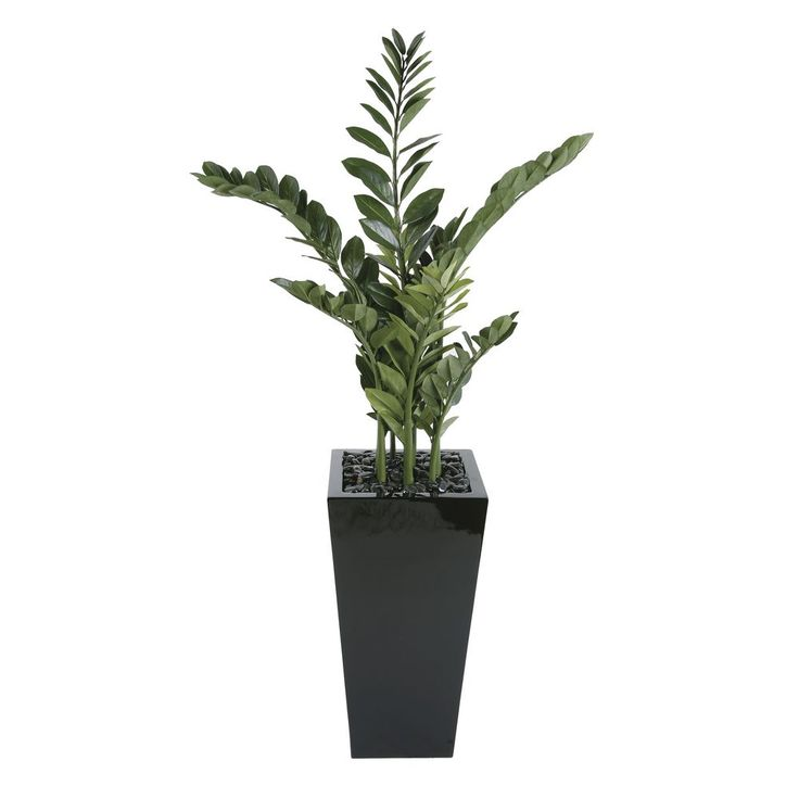 Large Smarago in High Square Pot   Officeworks