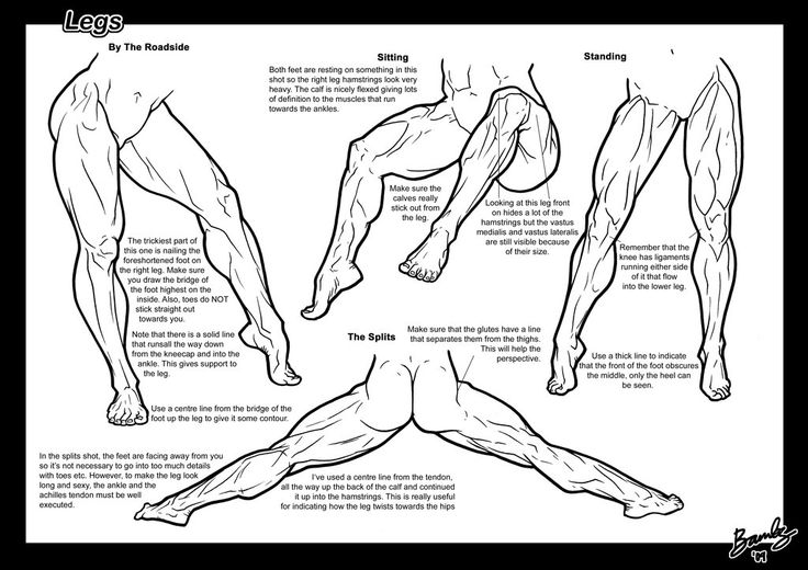 Page 2 of the Legs Tutorial. Muscular female anatomy comic or anatomical illustration female muscle growth buff bodybuilding