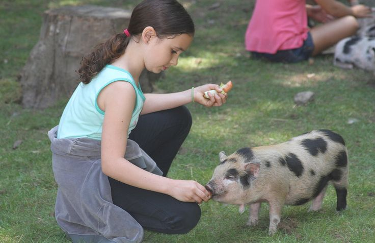 Farms near Seattle, pumpkin patch Seattle, Fox Hollow Farm Issaquah, has a fall festival in oct you need to buy tickets to, summer programs to check out as well.
