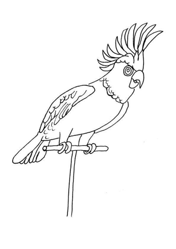 Les 110 meilleures images propos de coloriages d 39 oiseaux sur pinterest - Dessins de perroquets ...