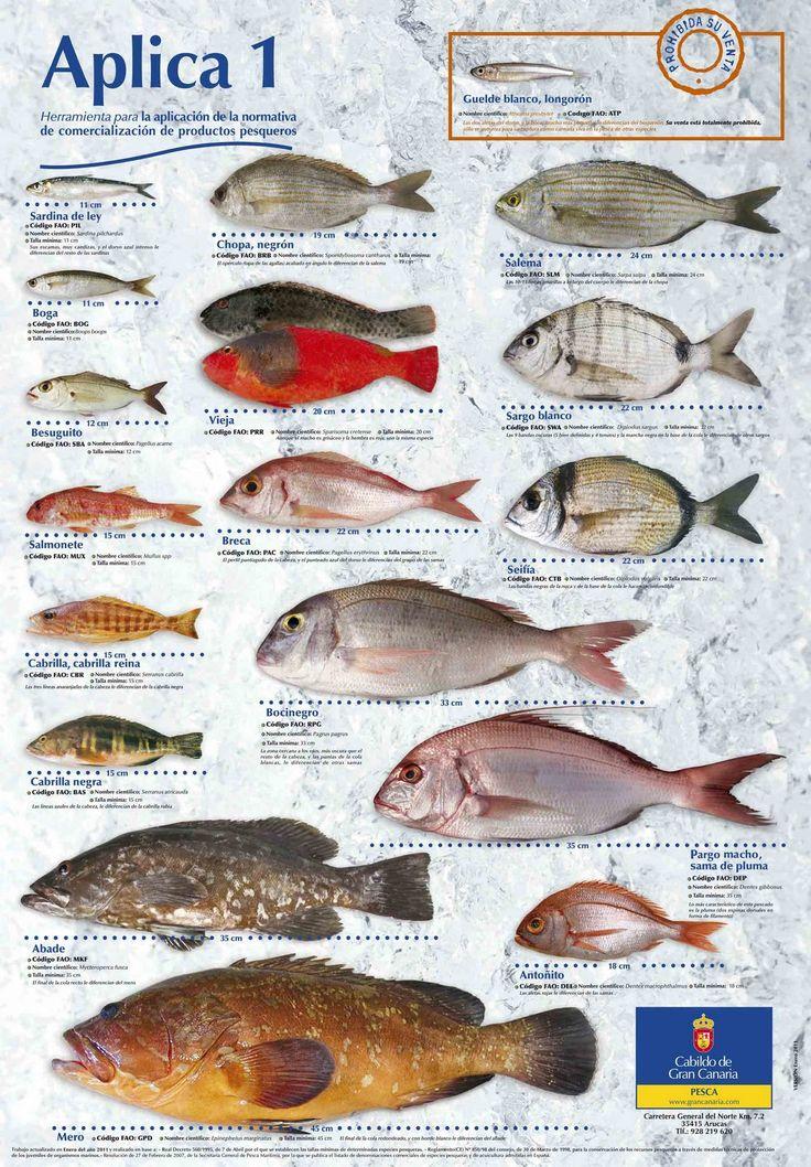 Poster tallas minimas de pesca - LANDIVE.ES