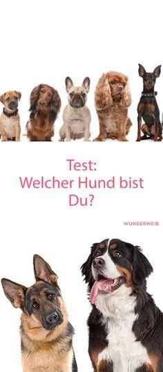 Welcher Hund wärst du wohl? Mache den Test!